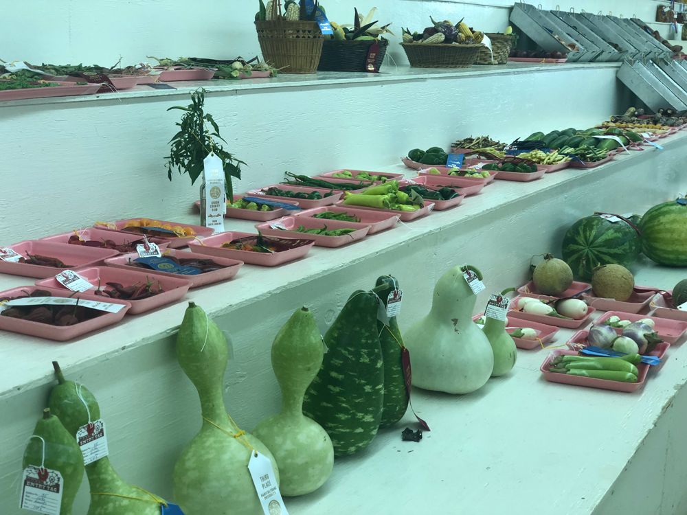 union-county-fair-arts-crafts-food-exhibits (25)