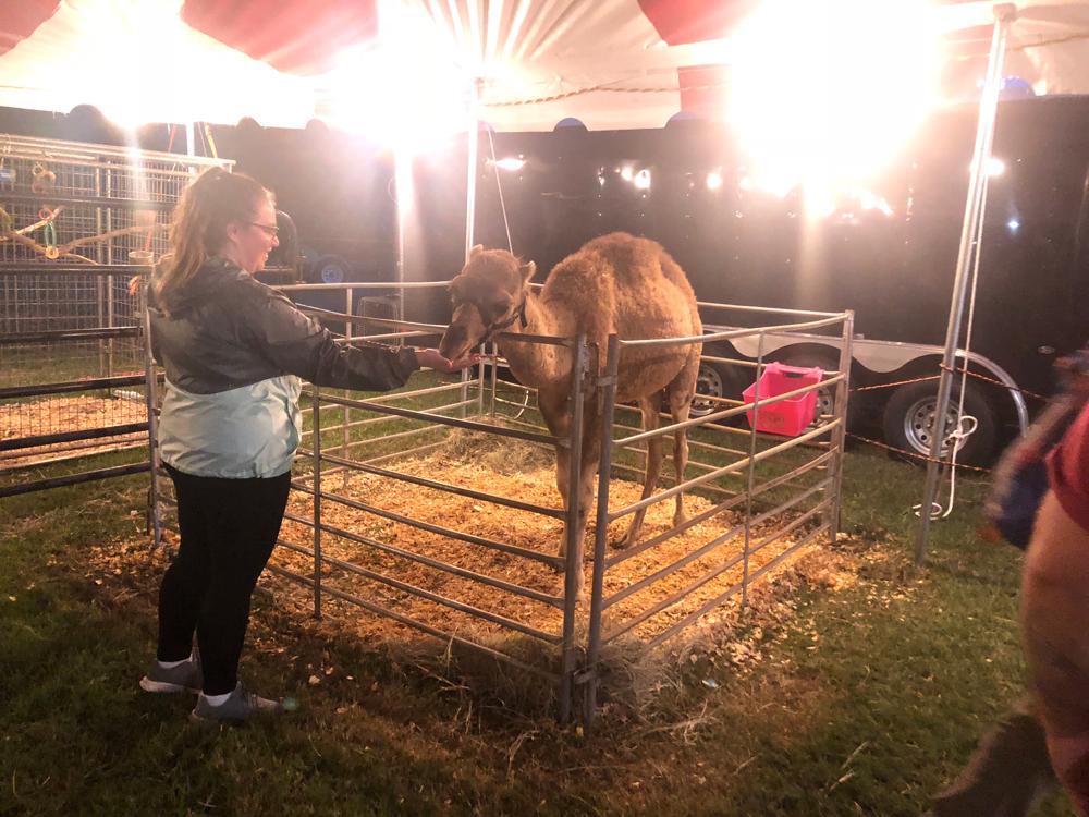 union-fair-all-american-petting-zoo-camel